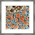 Cell Organelles, Sem Framed Print