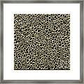 Cork Wood, Sem Framed Print