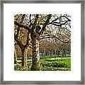 Daffodils In St. James's Park Framed Print by Elena Elisseeva
