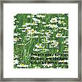 Daisy Fresh Framed Print