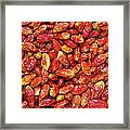 Dried Chili Peppers Framed Print by Carlos Caetano
