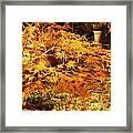 Fire Bush Framed Print