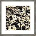 Flowers In Sepia Tone Framed Print