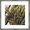 Green Fleece Seaweed Framed Print
