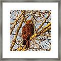 Hawk In A Tree Framed Print