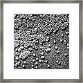 Hepatitis Virus Framed Print