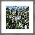 Himalayan Balsam (impatiens Glandulifer) Framed Print