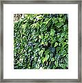 Ivy Wall Framed Print