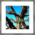 Knarled Oak Tree Framed Print