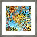 Looking Up At All The Colors Framed Print