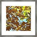 Maple Leaf Canopy Framed Print