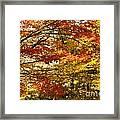 Maple Tree Foliage Framed Print