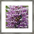 Monkey Orchid (orchis Simia) Framed Print
