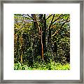 Oahu Rainforest Framed Print