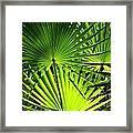 Palmettos Framed Print