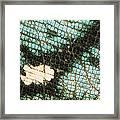 Parsons Chameleon Calumma Parsonii Framed Print