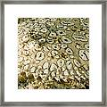 Peacock Sole On The Sea Bed Framed Print
