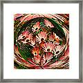 Pink African Daisies Framed Print