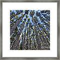 Power In Pines Framed Print