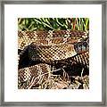 Rattlesnake Framed Print