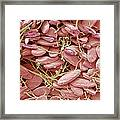 Reptilian Red Blood Cells, Sem Framed Print