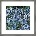Sea Holly (eryngium X Oliverianum) Framed Print