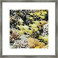 Seale's Cardinalfish Framed Print