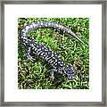 Slimy Salamander Framed Print