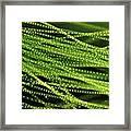 Spirogyra Algae, Light Micrograph Framed Print