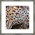 Spotted Starfish Framed Print