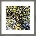 Stalwart Pine Tree Framed Print