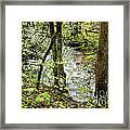 Stream Monongahela National Forest Framed Print