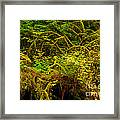 Temperate Rain Forest Framed Print by Adam Jewell