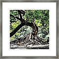 Tree Of Life Framed Print by Kenneth Mucke