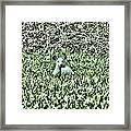 White Deer Framed Print