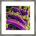 Yersinia Pestis Bacteria, Sem Framed Print