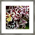 C Ribet Orchids Framed Print