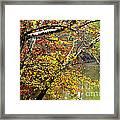 Fall Along West Fork River Framed Print
