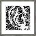 Human Ear Framed Print