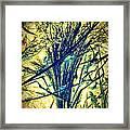 Miiviaa Framed Print