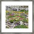 Mother Nature's Master Garden Framed Print