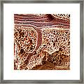 Mouse Lung, Sem Framed Print by Science Source
