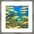 School Of Yellowfin Goatfish Framed Print