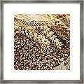 Wheat Ears And Grain Framed Print