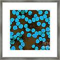 Yellow Fever Virus, Tem Framed Print by Science Source