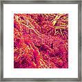 Blood Vessels, Sem Framed Print