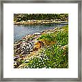 Atlantic Coast In Newfoundland Framed Print