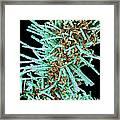 Diatoms, Sem Framed Print