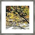 Fall Along Williams River Framed Print