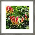 Gloriosa Named Rothschildiana Framed Print